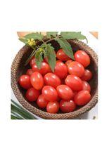 semente-feltrin-box-tomate-carolina