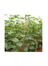 semente-feltrin-hibrido-pepino-japones-soudai